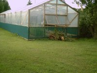 Large Glasshouse 1